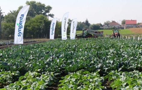 Káposzta: hazai termesztésből érkezik a természetes vitaminbomba