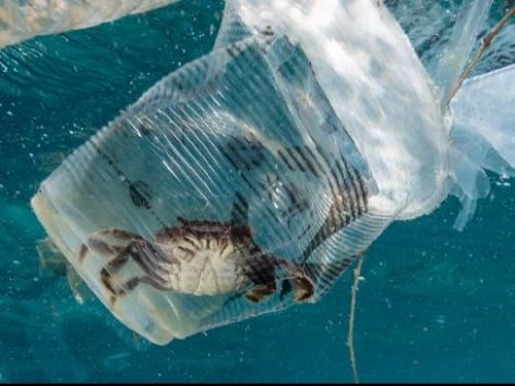 An Animated Short Explores the Tragic Impacts of Plastic Pollution – Video of the day