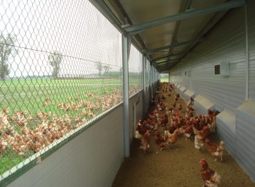 Protecting egg-laying chickens is an investment that returns