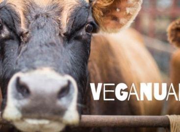Veganuary: virágoznak a vegán retailerek