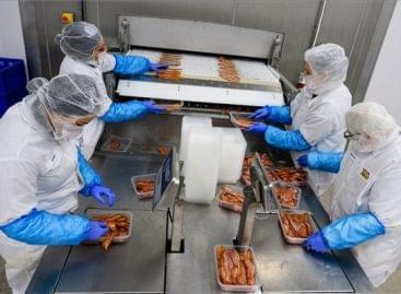 Nagy beruházás a Tamási-húsnál