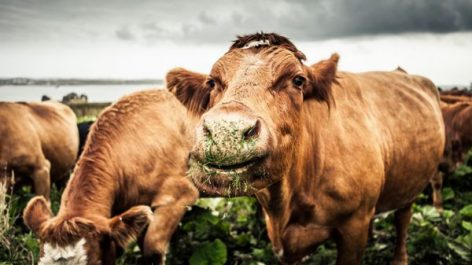 Waitrose Introduces App To Monitor Farm Animal Happiness