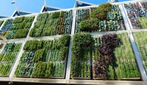 Indoor függőleges farmok: megoldás az élelmiszerellátási problémákra