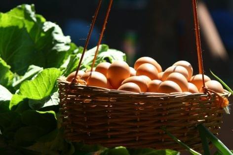 A tojás legyen  friss, ép és szép