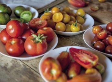 Magazin: A paradicsom hódítása