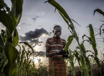 Akár 49 millió rászorulót is elérhet a FAO támogatása idén