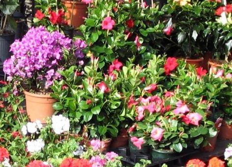 Nagy István: Florists may be open in the markets