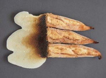 Korunk mézes kenyere – A nap képe