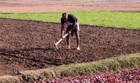 Hatalmas a munkaerőhiány a brit farmokon
