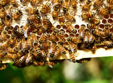 Méhek Napja – tőlük függ élelmiszerellátásunk jövője