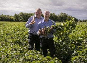 Otthon újrahaszonosítható burgonyacsomagolást tesztel a Tesco Írország
