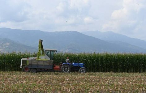 FAO: Global food prices rise at rapid pace in May