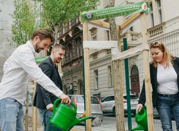 Városfásítási programot indít az étteremlánc