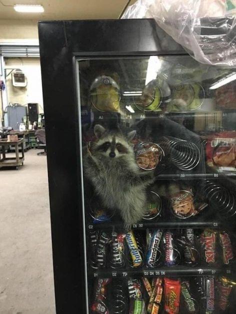 Vendingautomata, kis meglepetéssel – A nap képe