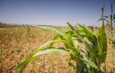 Egy év drágulás után végre csökkenés a globális élelmiszerárakban