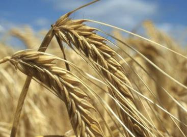 FAO: Csökkentek a globális élelmiszerárak júliusban