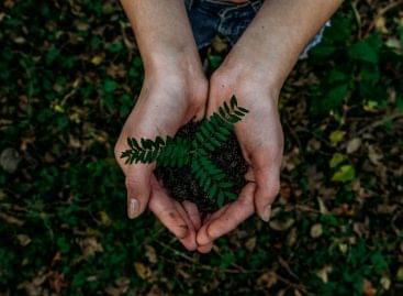 Starbucks a magyar erdőkért és a fenntartható megoldásokért
