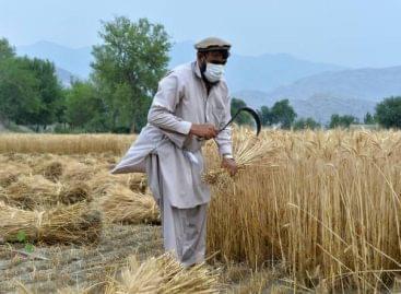 Aszály fenyeget 7 millió gazdát Afganisztánban