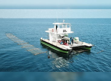 An automated 'sea combine' for harvesting seaweed at scale