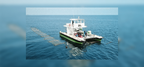 Tengerkombájn: aratás a víz alatt