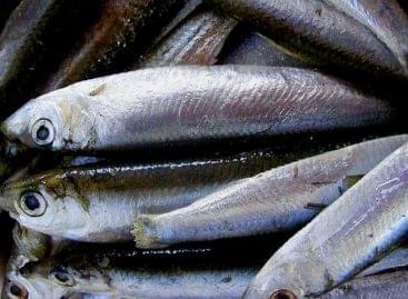 Több cég is halgazdálkodásról szóló megállapodást sürget Nagy-Britanniában