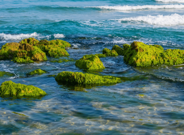 Smart bioplastic made using upcycled green algae helps to clean up beaches