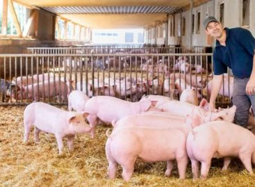 Ötéves a Kaufland húsprogramja