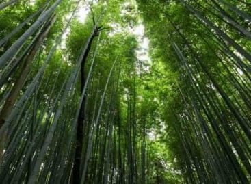 Fák millióit ülteti el a Nestlé
